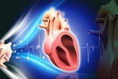 человек сердца Стоковое Изображение RF