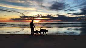 человек силуэта 4k счастливый идя с собаками на пляже захода солнца сток-видео
