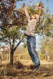 Человек скачет для груш стоковое изображение rf