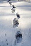 человек следа ноги Стоковые Фотографии RF