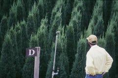 Человек смотря валы ели Стоковое Изображение RF