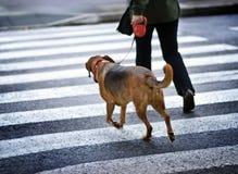 человек собаки Стоковые Фотографии RF