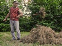 Человек собирает сухую траву с вилами стоковые фото