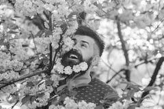 Человек с бородой и усик на счастливой стороне около розовых цветков Битник наслаждается весной с цветением Сакуры в бороде лучей стоковые изображения rf