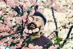 Человек с бородой и усик на счастливой стороне около розовых цветков Битник наслаждается весной с цветением Сакуры в бороде лучей стоковые фото