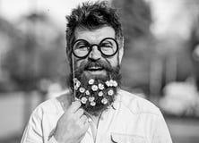 Человек с длинными бородой и усиком, defocused предпосылкой природы Гай смотрит славно с цветками маргаритки или стоцвета в бород стоковые фотографии rf