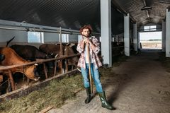 Человек с коровами вилы подавая Стоковое Изображение RF