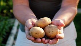 Человек с органическими картошками в руках сток-видео