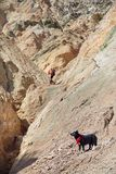 Человек с собакой в горах стоковое фото