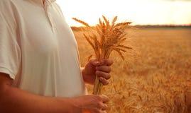 Человек с ушами пшеницы на предпосылке поля стоковое фото rf
