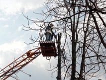 Человек с цепной пилой стоит на воздушной рабочей платформе и смотрит pollarded ствол дерева Концепция заботить для высоких дерев стоковое фото rf