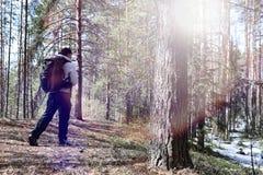 Человек турист в сосновом лесе с рюкзаком Пеший tr стоковые фото