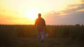 Человек фермера идя через поле на заходе солнца или восходе солнца Снесите саженец дерева и лопаткоулавливатель, концепцию - рабо сток-видео