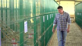 Человек фермера работая и проверяя качество в птицеферме птицы, дворе фермы индюка обрабатывающ землю, продукция птицы, птица видеоматериал