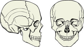 человек черепа Стоковое фото RF