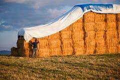 человек haystack Стоковая Фотография RF