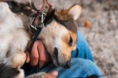 Человек sittting и держа милая коричневая собака на задней части на коленях в парке стоковые фото