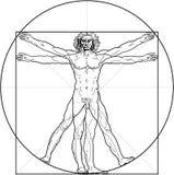 человек vitruvian Стоковое Изображение