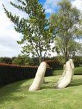 Человеческая рука держа дерево стоковые изображения