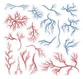 Человеческие вены и артерии иллюстрация вектора