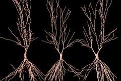Человеческие нейроны гиппокампа, реконструкция компьютера Стоковая Фотография
