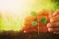 человеческие руки засаживают молодой завод в свежей земле новая концепция старта и экологичности Стоковое Изображение RF