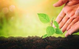 человеческие руки засаживают молодой завод в свежей земле новая концепция старта и экологичности Стоковое Изображение