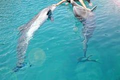Человеческие руки и дельфины, солнечный день с шаловливыми животными, консервация и защита животных в рифе дельфина в Израиле стоковое изображение