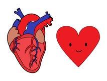Человеческие сердце и символ иллюстрация вектора