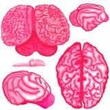Человеческий и животный комплект черепа в низком поли дизайне Иллюстрация вектора