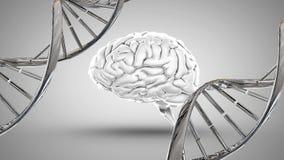 Человеческий мозг и ДНК иллюстрация вектора