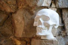 Человеческий череп гипсолита белого цвета стоковая фотография rf
