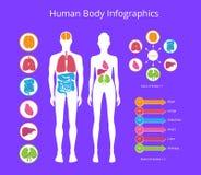 Человеческое тело Infographic на иллюстрации вектора бесплатная иллюстрация