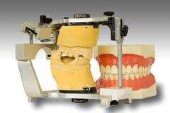 челюсти 2 Стоковое фото RF