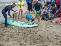 Чемпионаты собаки мира занимаясь серфингом Стоковые Изображения