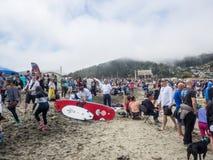 Чемпионаты собаки мира занимаясь серфингом Стоковые Изображения RF