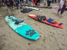 Чемпионаты собаки мира занимаясь серфингом Стоковое Изображение