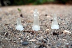 Чемпион шахмат Стоковые Изображения RF