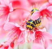Червь и цветок стоковые изображения rf