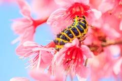 Червь и цветок стоковые фотографии rf