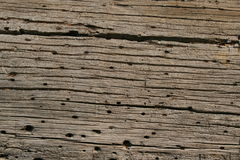 Червь древесины ствола дерева Стоковая Фотография