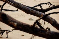 Через ветви Стоковые Фотографии RF