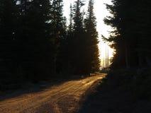 Через деревья стоковая фотография