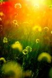 через заход солнца цветков стоковые изображения