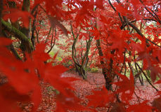 Через листья Стоковое фото RF