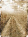 через майну поля Стоковые Фотографии RF