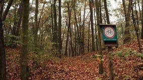 Через осень леса/парка после дождя Вертикальная панорама от деревьев к дороге сток-видео