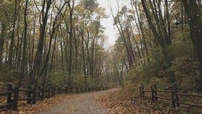 Через осень леса/парка после дождя дорога mak koh пущи Опрокидывать съемку акции видеоматериалы