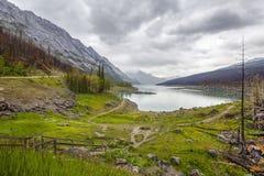 Через один год после лесного пожара озера медицин - Альберты, Канада Стоковое Фото