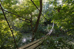 через подвес реки моста Стоковое фото RF